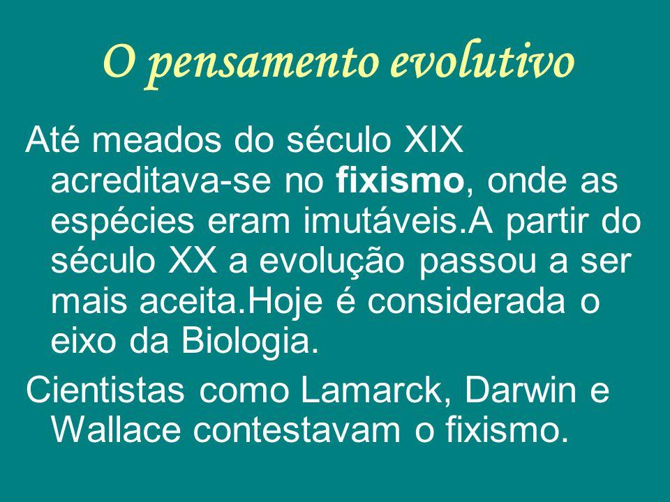 O pensamento evolutivo