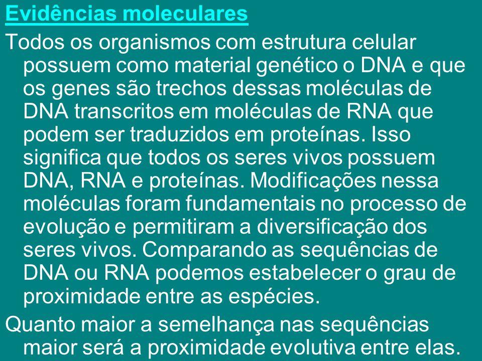 Evidências moleculares