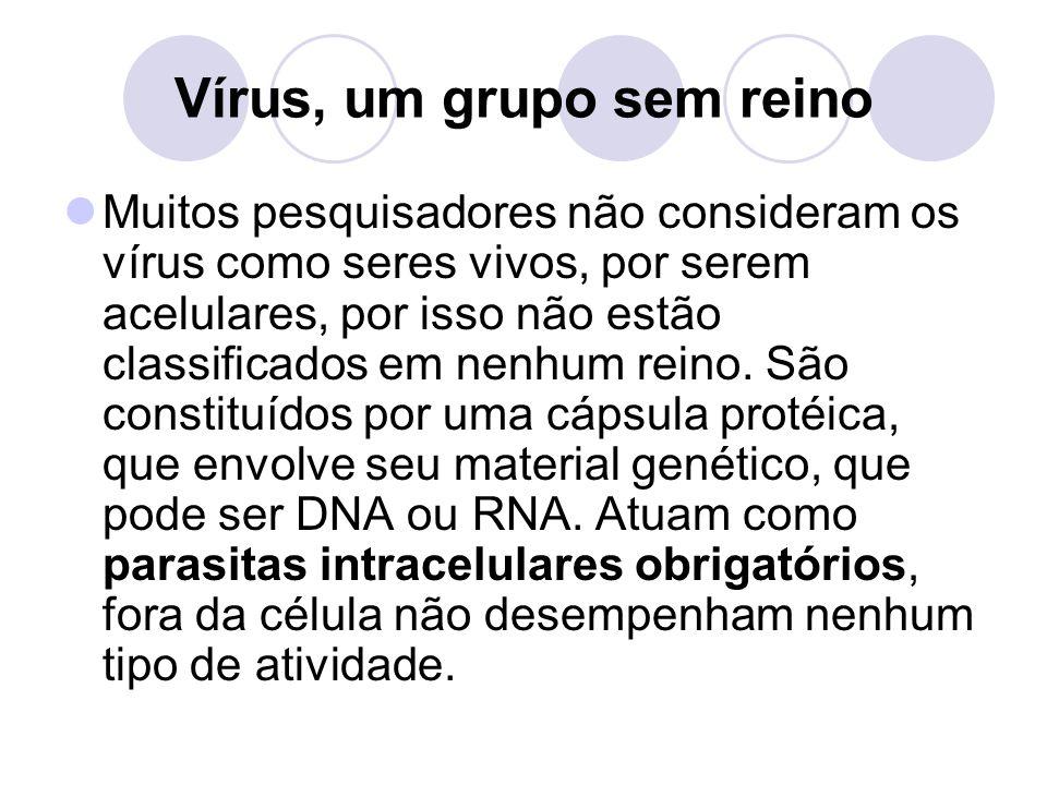 Vírus, um grupo sem reino