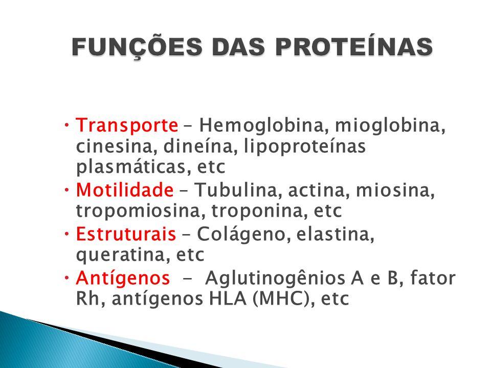 FUNÇÕES DAS PROTEÍNAS Transporte – Hemoglobina, mioglobina, cinesina, dineína, lipoproteínas plasmáticas, etc.