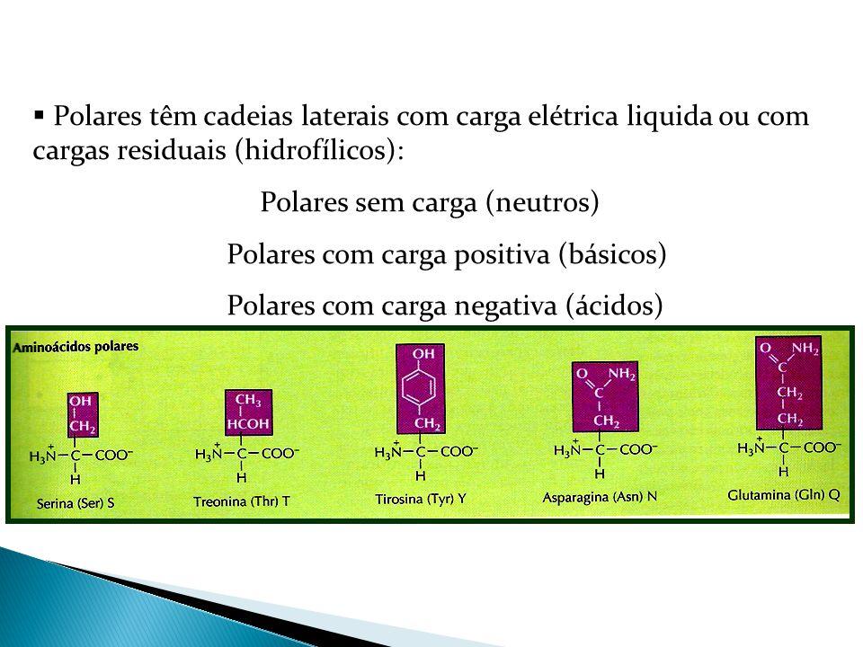 Polares com carga positiva (básicos)