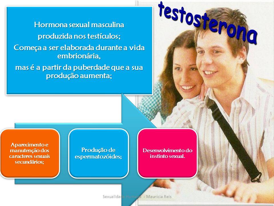 testosterona Hormona sexual masculina produzida nos testículos;