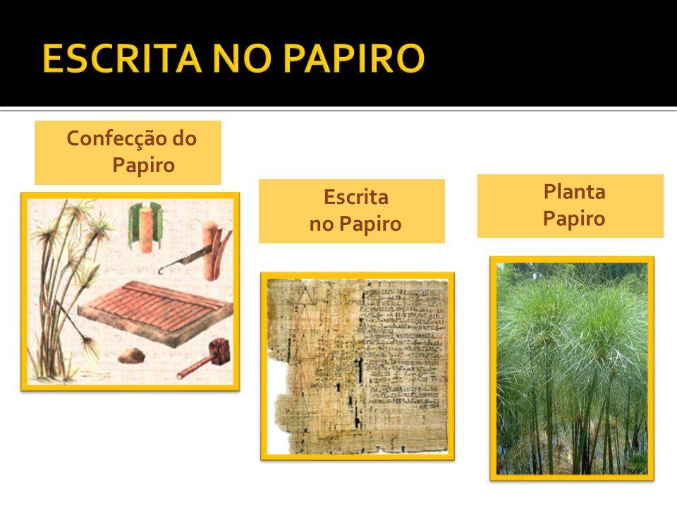 ESCRITA NO PAPIRO Confecção do Papiro Planta Papiro Escrita no Papiro