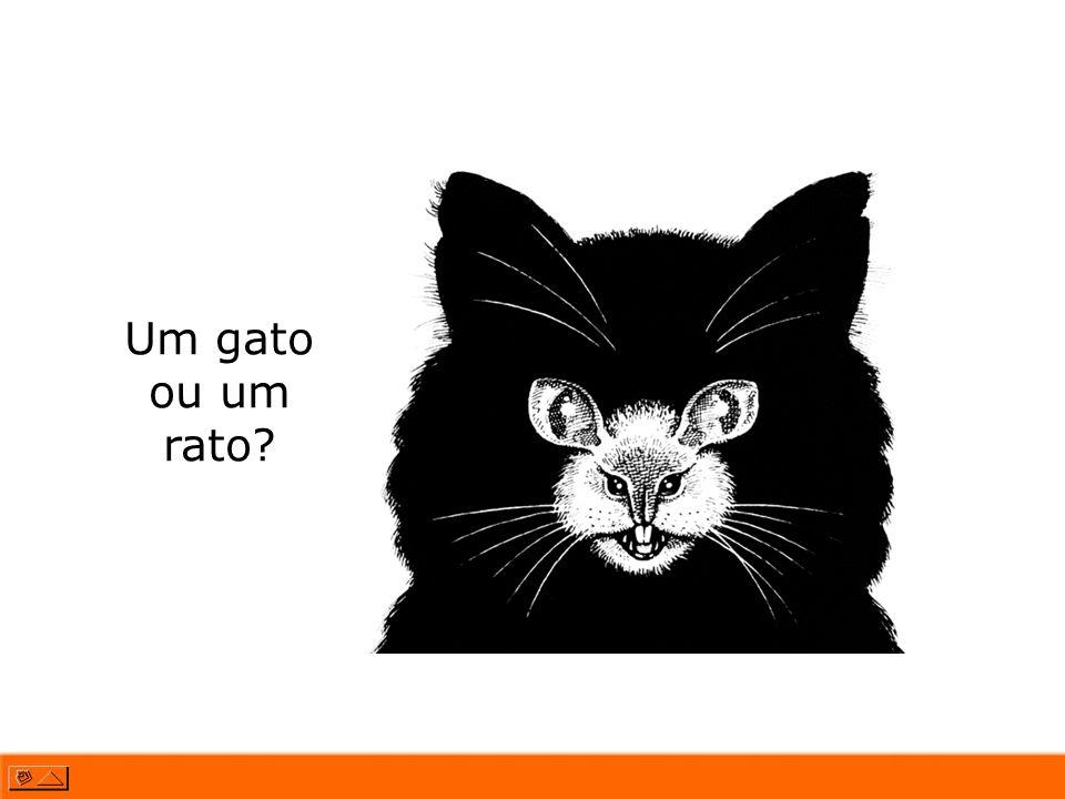 Um gato ou um rato