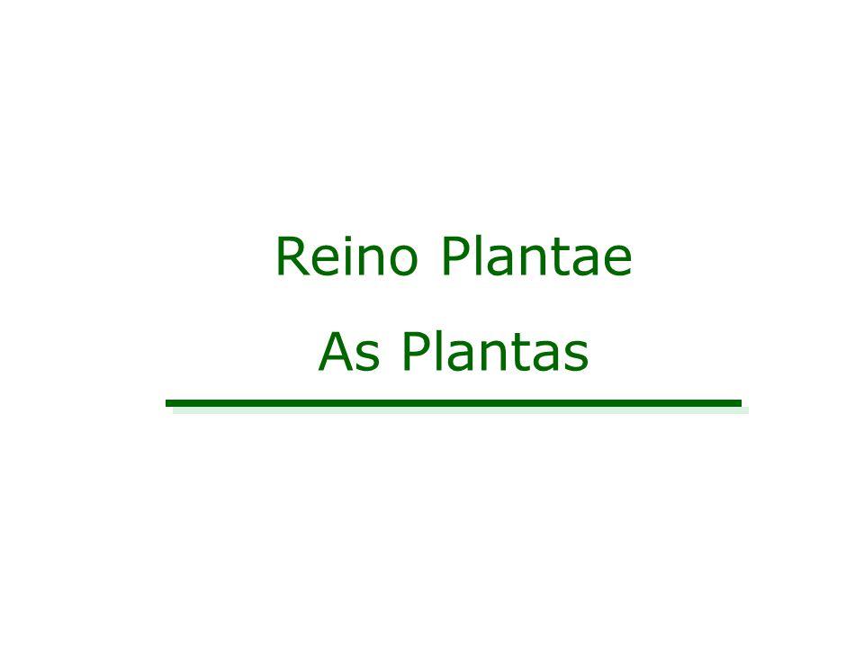 Reino Plantae As Plantas