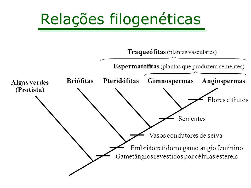 Relações filogenéticas