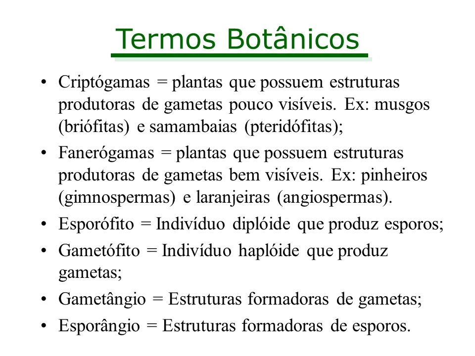 Termos Botânicos