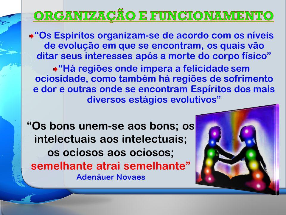 ORGANIZAÇÃO E FUNCIONAMENTO