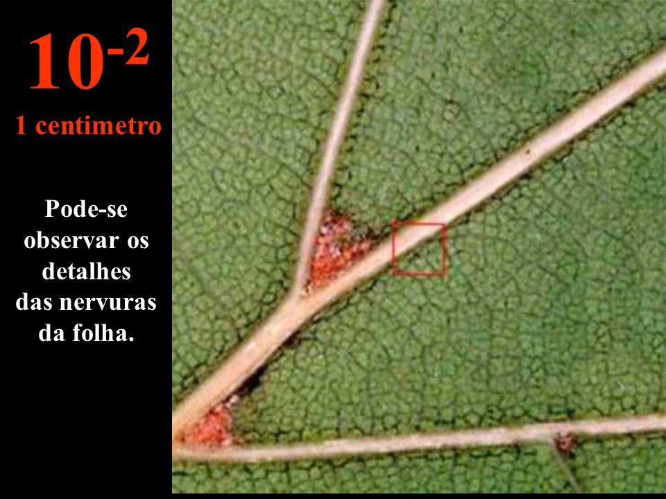 Pode-se observar os detalhes das nervuras da folha.