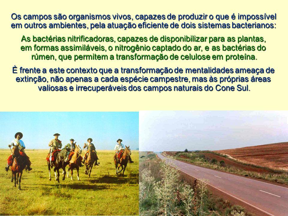 Os campos são organismos vivos, capazes de produzir o que é impossível