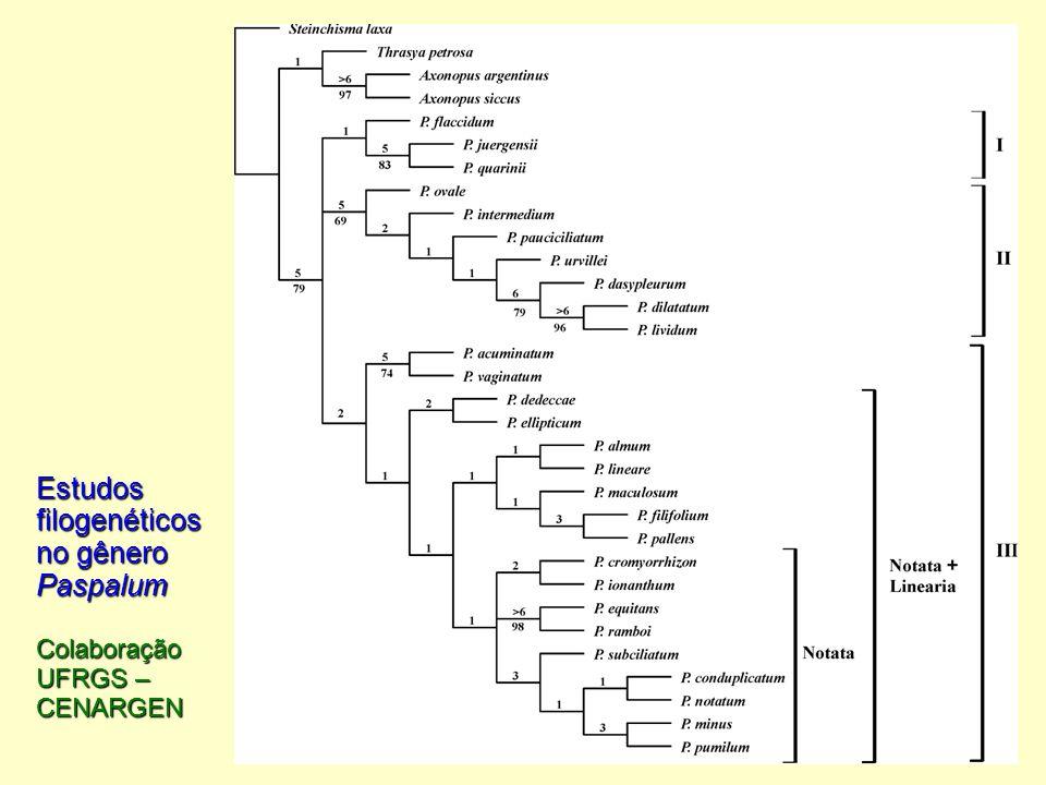 Estudos filogenéticos no gênero Paspalum Colaboração UFRGS – CENARGEN