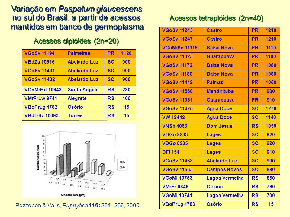 Variação em Paspalum glaucescens no sul do Brasil, a partir de acessos