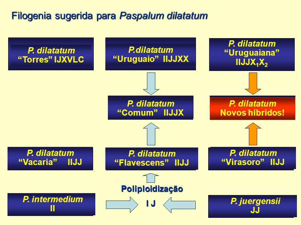 Filogenia sugerida para Paspalum dilatatum