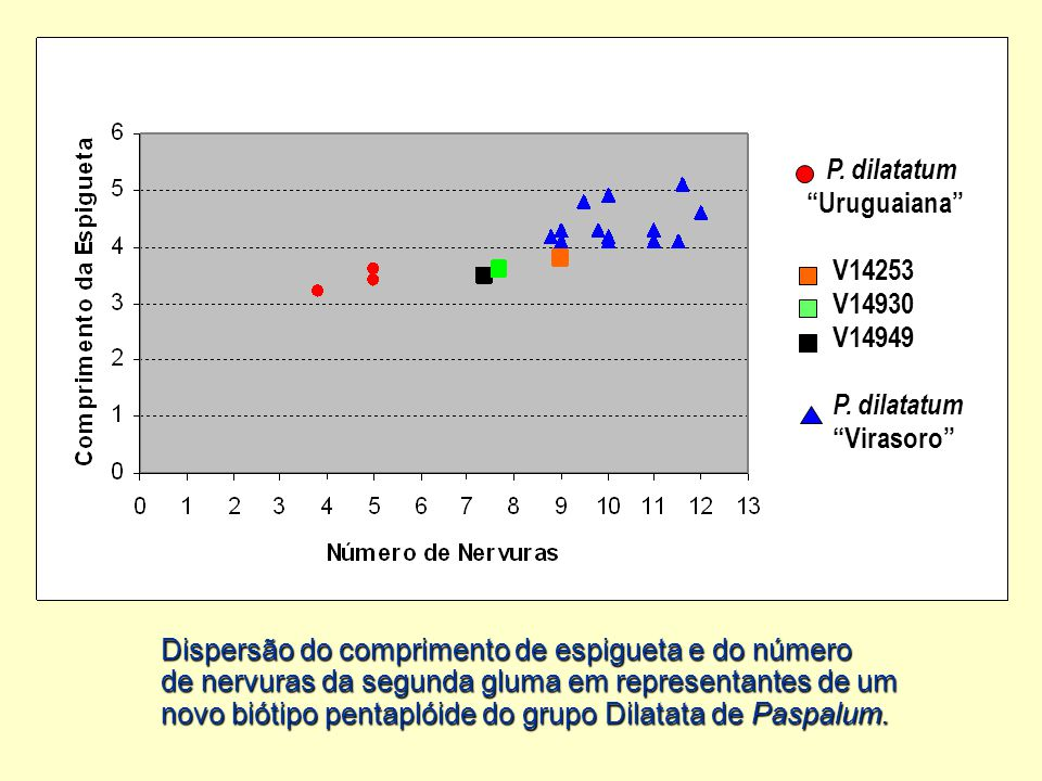 Dispersão do comprimento de espigueta e do número