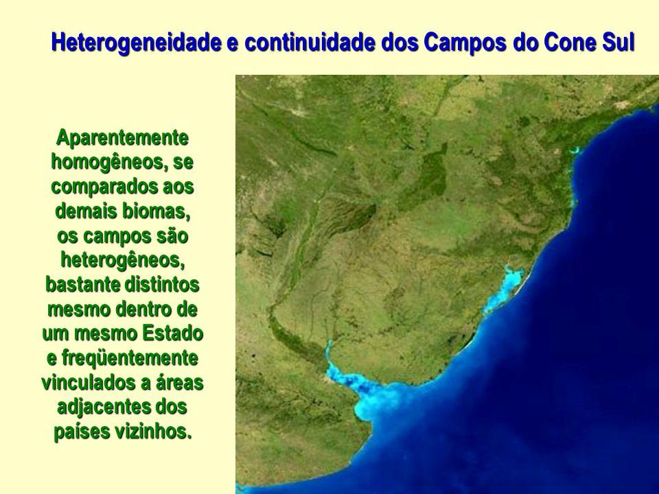 Heterogeneidade e continuidade dos Campos do Cone Sul