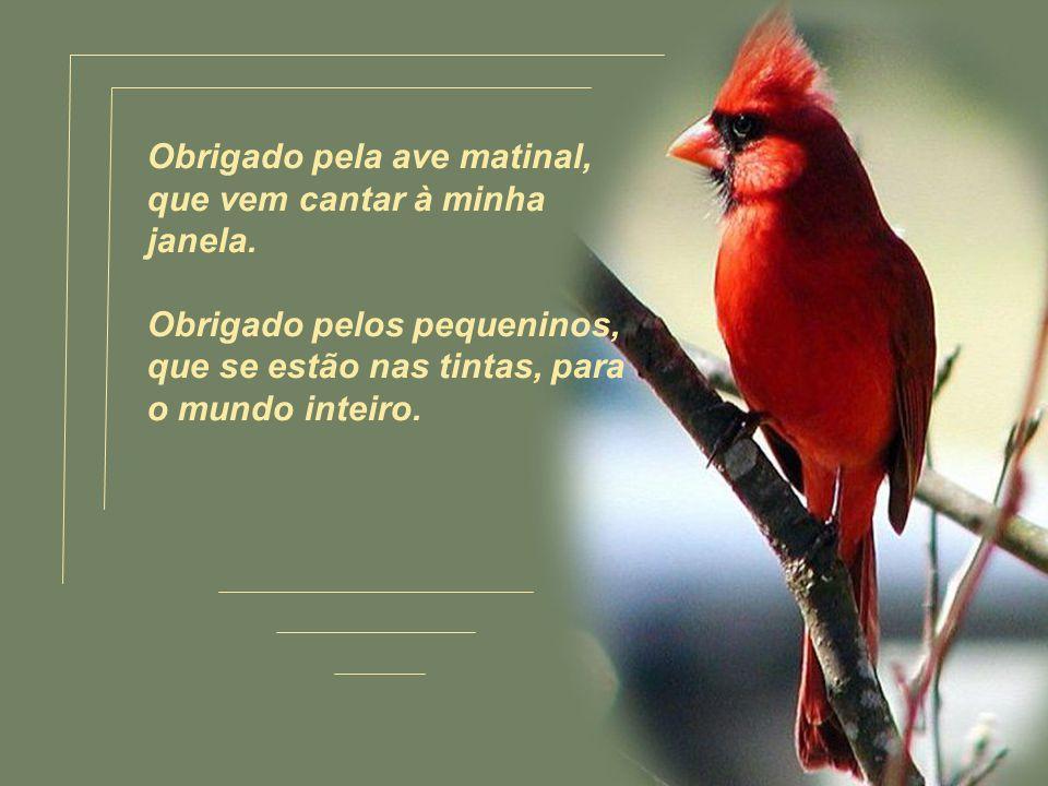 Obrigado pela ave matinal, que vem cantar à minha janela.
