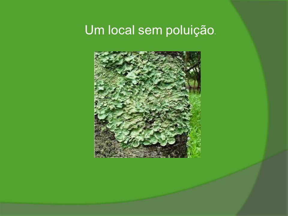 Um local sem poluição.