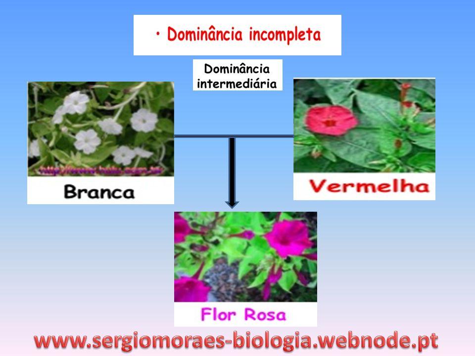 www.sergiomoraes-biologia.webnode.pt