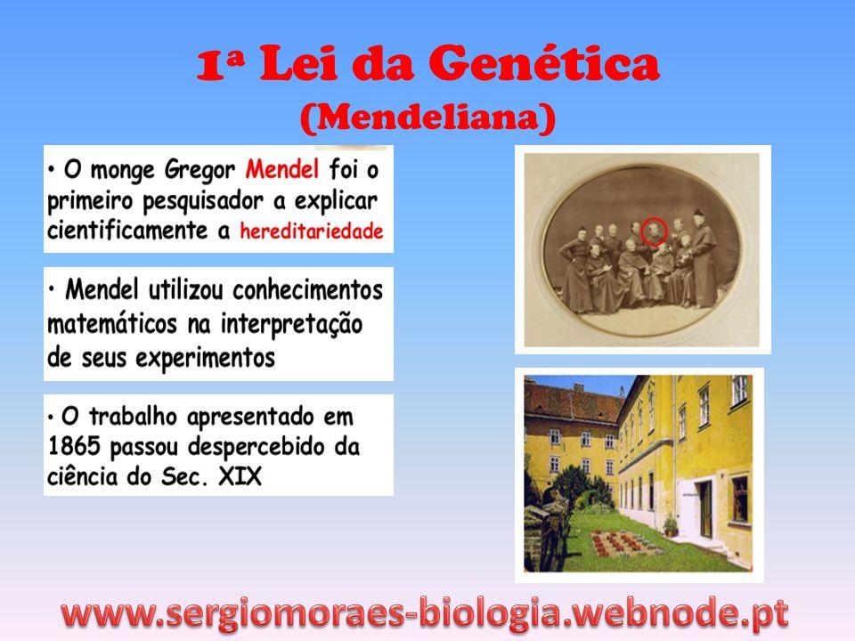 1ª Lei da Genética (Mendeliana) www.sergiomoraes-biologia.webnode.pt