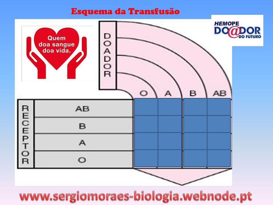 Esquema da Transfusão www.sergiomoraes-biologia.webnode.pt