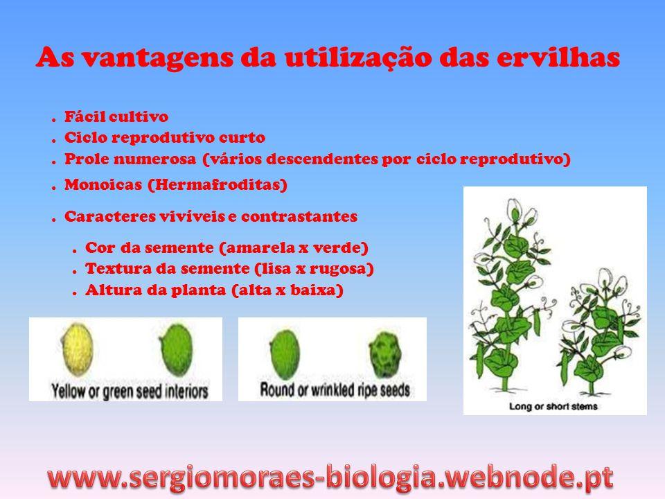 As vantagens da utilização das ervilhas