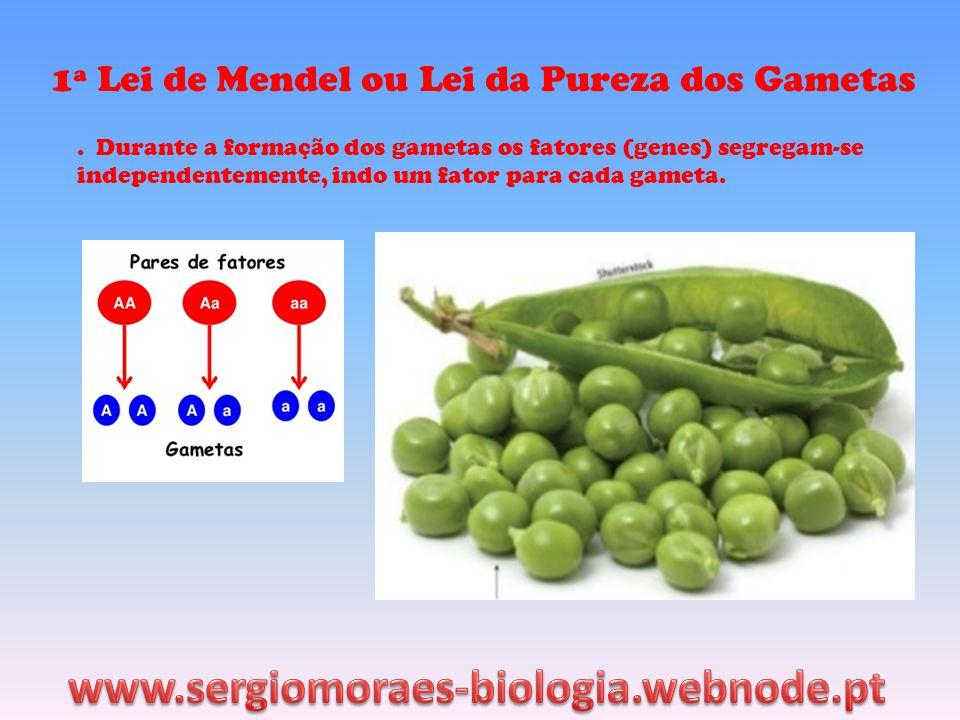 1ª Lei de Mendel ou Lei da Pureza dos Gametas