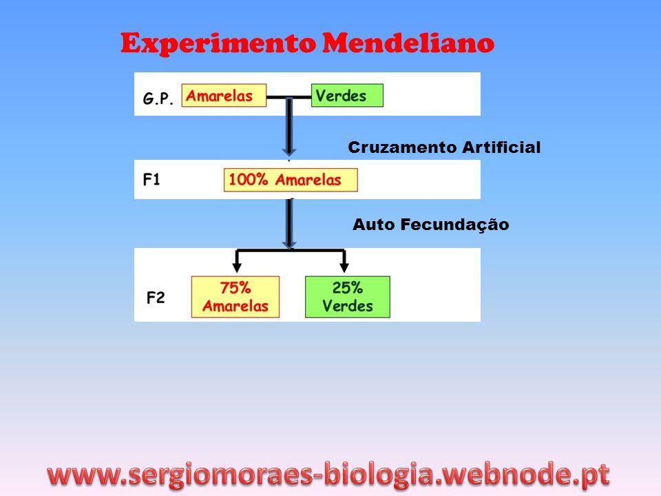 www.sergiomoraes-biologia.webnode.pt Experimento Mendeliano