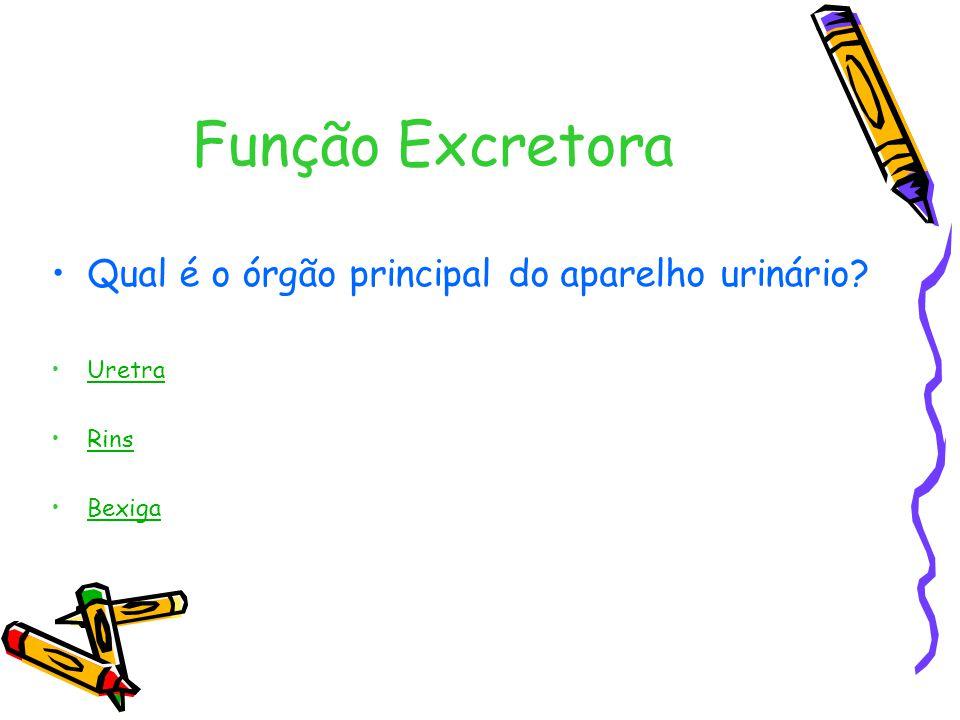 Função Excretora Qual é o órgão principal do aparelho urinário Uretra