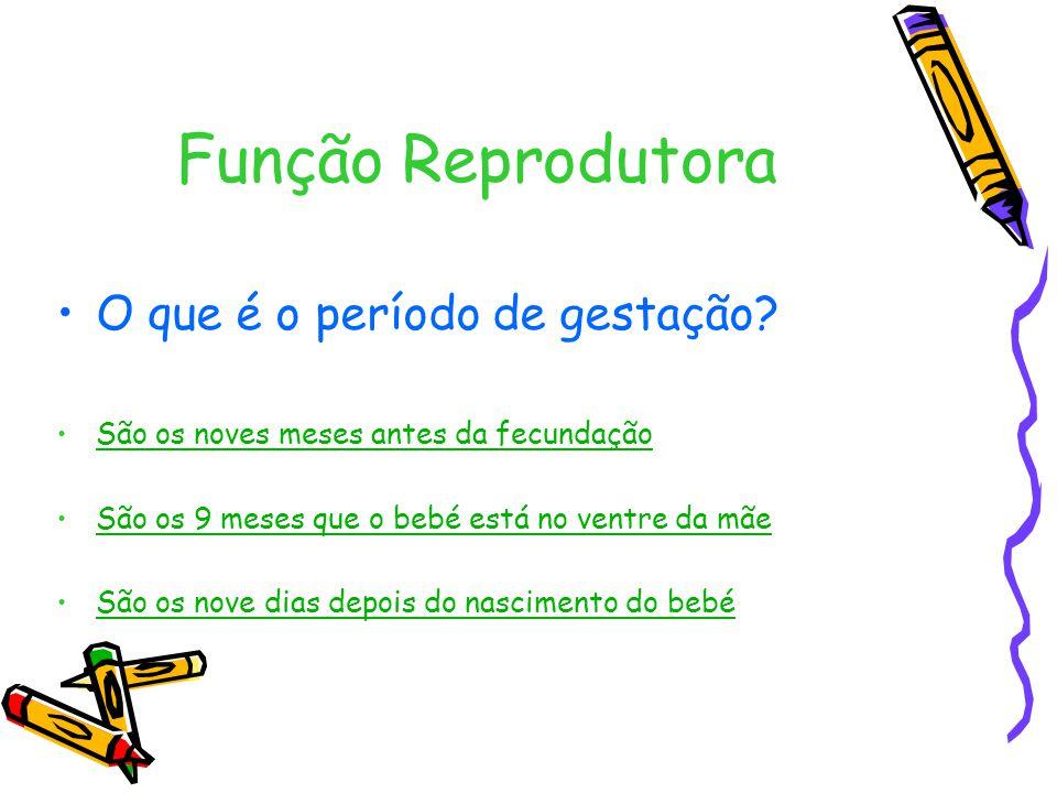 Função Reprodutora O que é o período de gestação