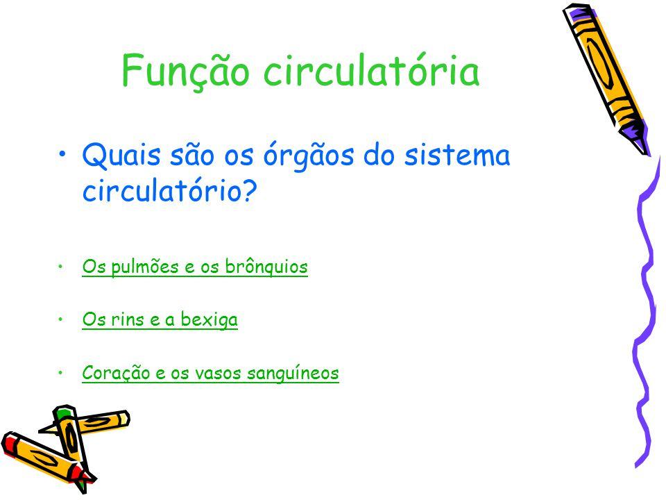 Função circulatória Quais são os órgãos do sistema circulatório
