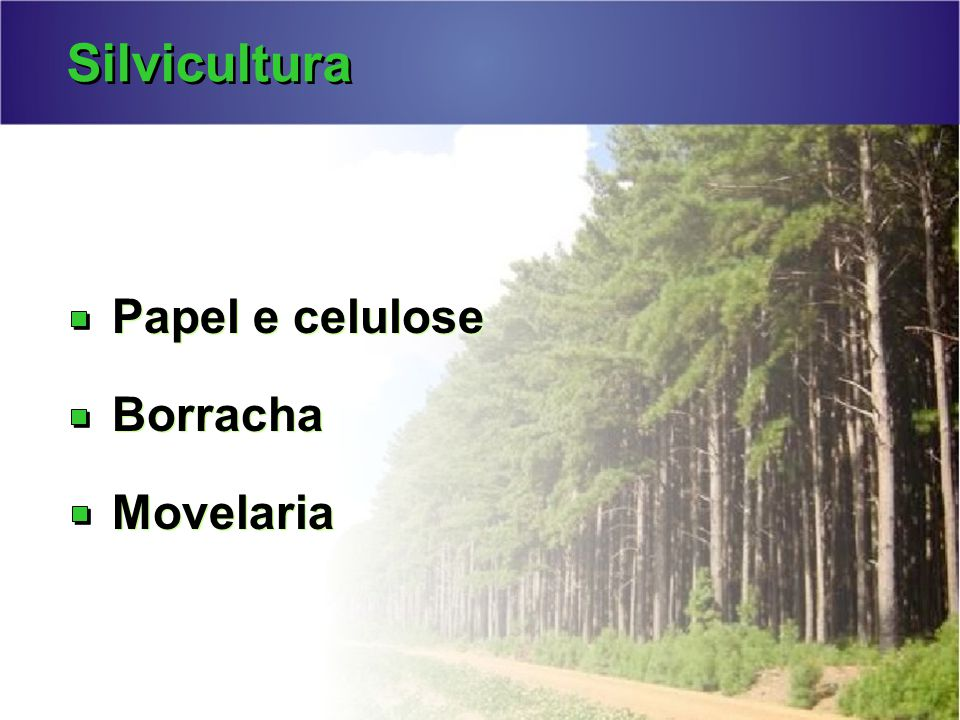 Silvicultura Papel e celulose Borracha Movelaria