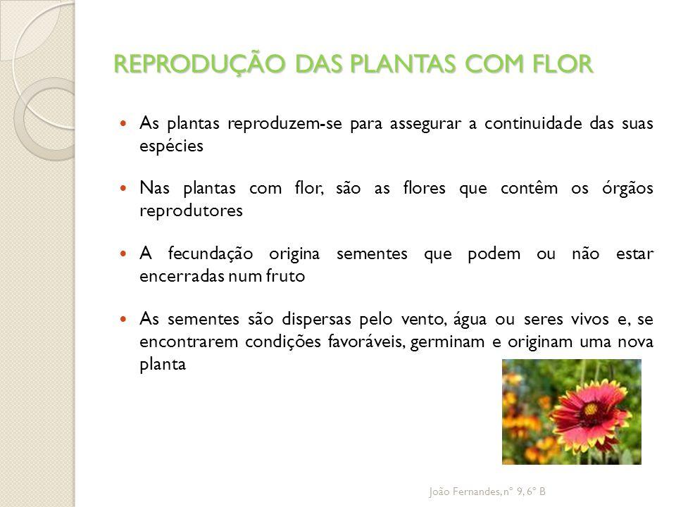 REPRODUÇÃO DAS PLANTAS COM FLOR