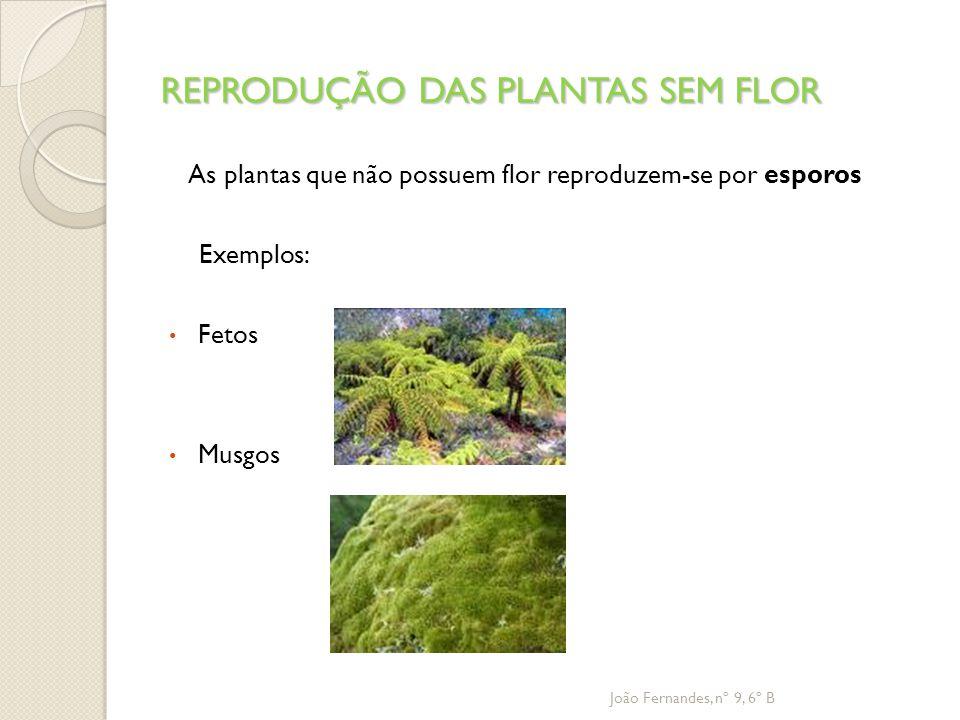 REPRODUÇÃO DAS PLANTAS SEM FLOR
