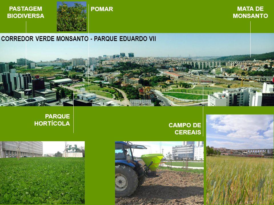 CORREDOR VERDE MONSANTO - PARQUE EDUARDO VII