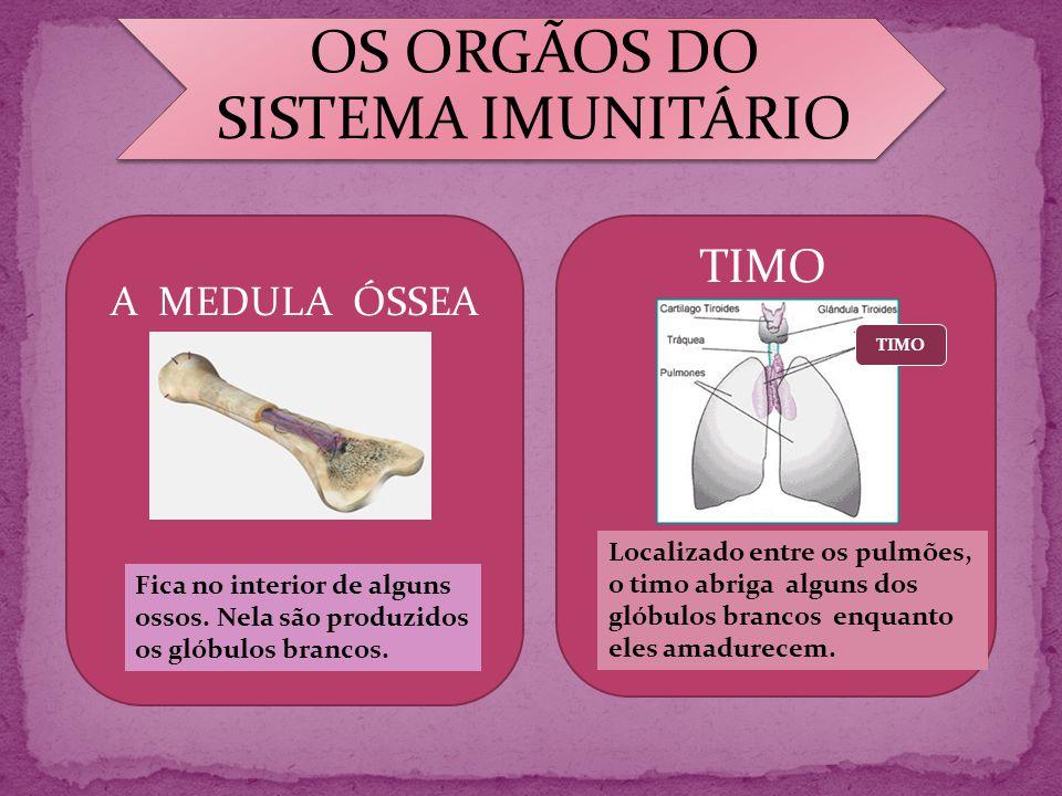 OS ORGÃOS DO SISTEMA IMUNITÁRIO