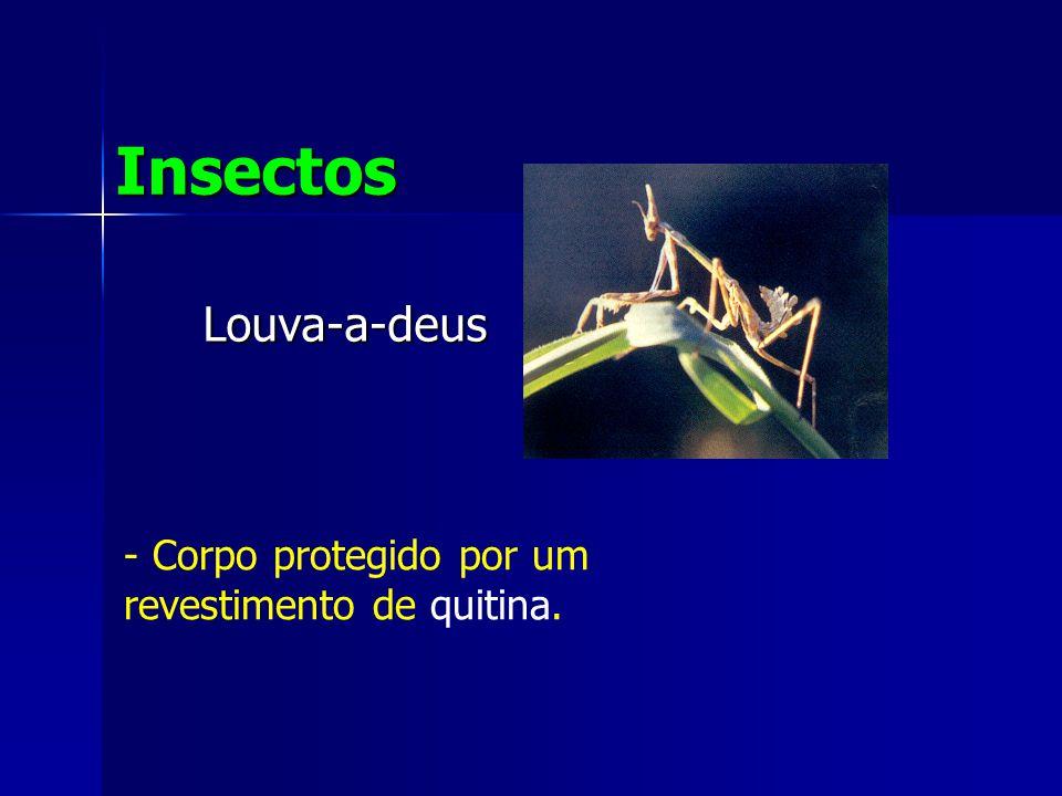 Insectos Louva-a-deus Corpo protegido por um revestimento de quitina.