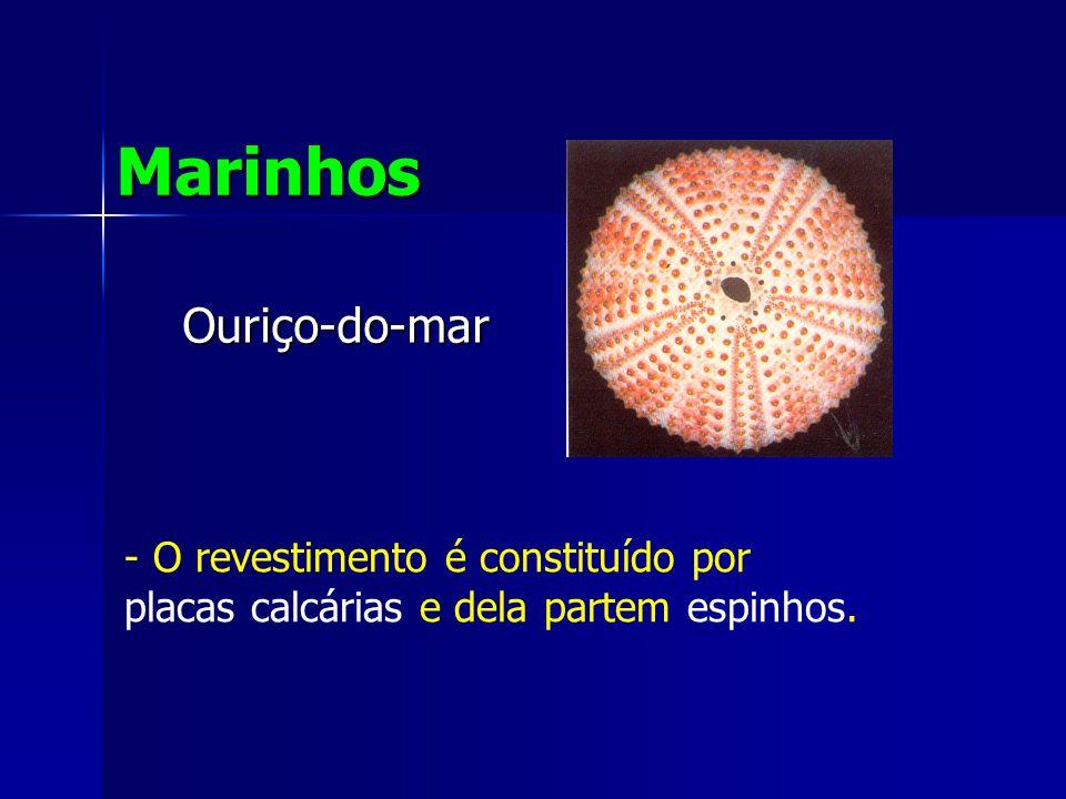Marinhos Ouriço-do-mar O revestimento é constituído por