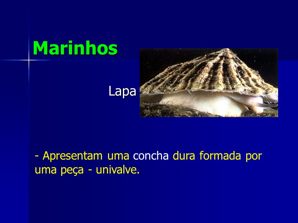 Marinhos Lapa Apresentam uma concha dura formada por uma peça - univalve.