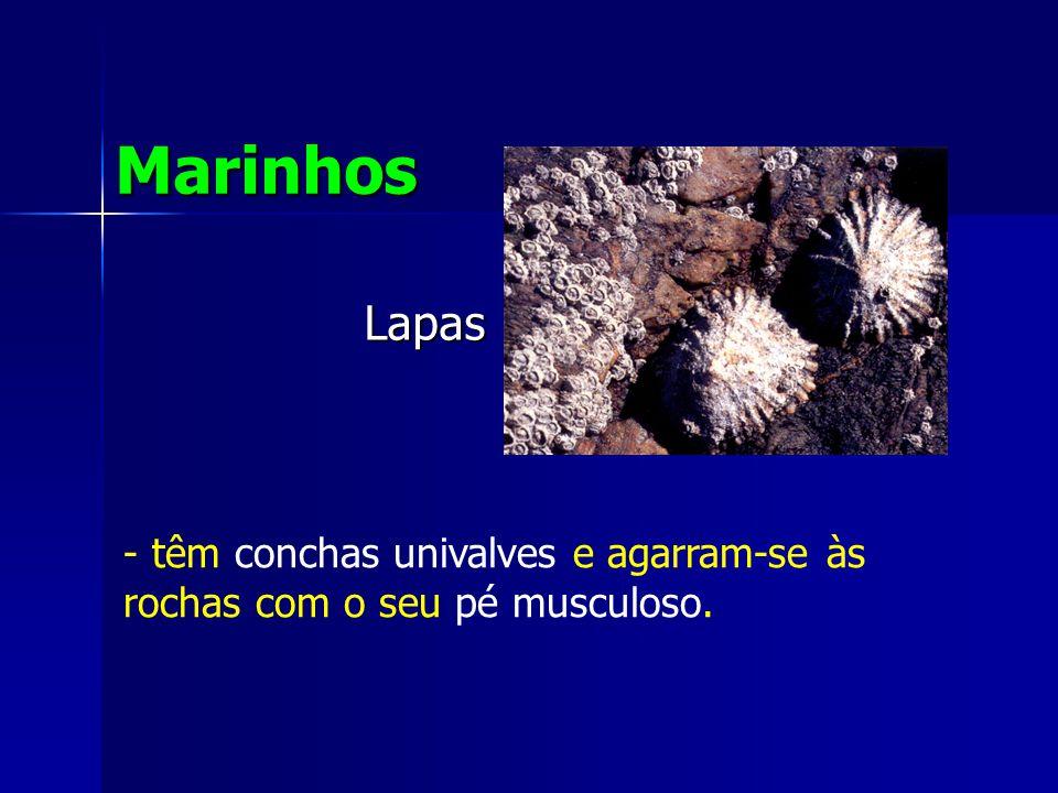 Marinhos Lapas têm conchas univalves e agarram-se às rochas com o seu pé musculoso.