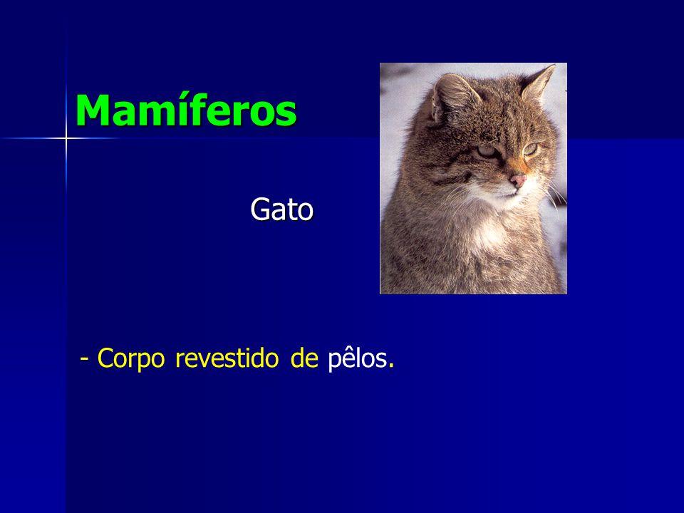 Mamíferos Gato - Corpo revestido de pêlos.