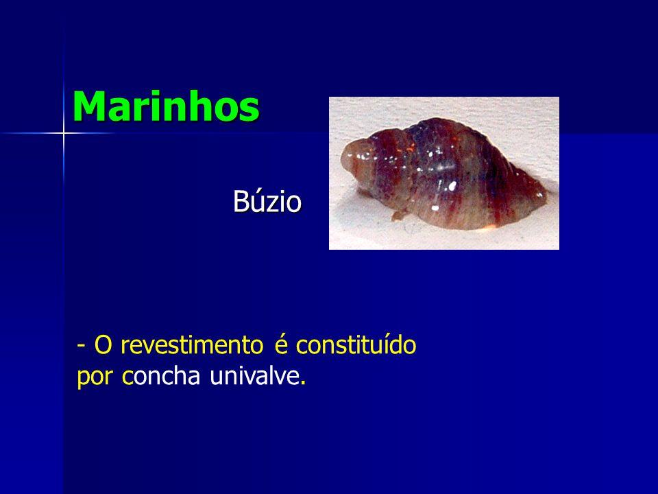 Marinhos Búzio O revestimento é constituído por concha univalve.