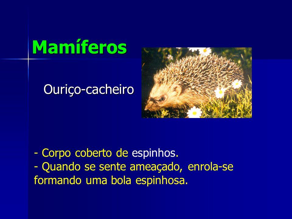 Mamíferos Ouriço-cacheiro Corpo coberto de espinhos.