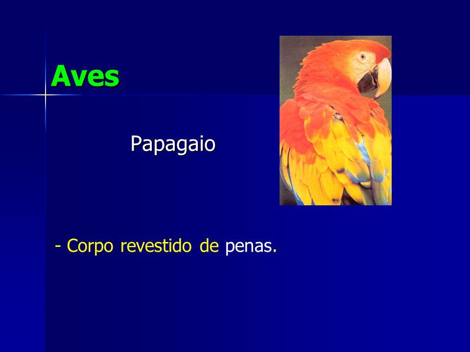 Aves Papagaio - Corpo revestido de penas.