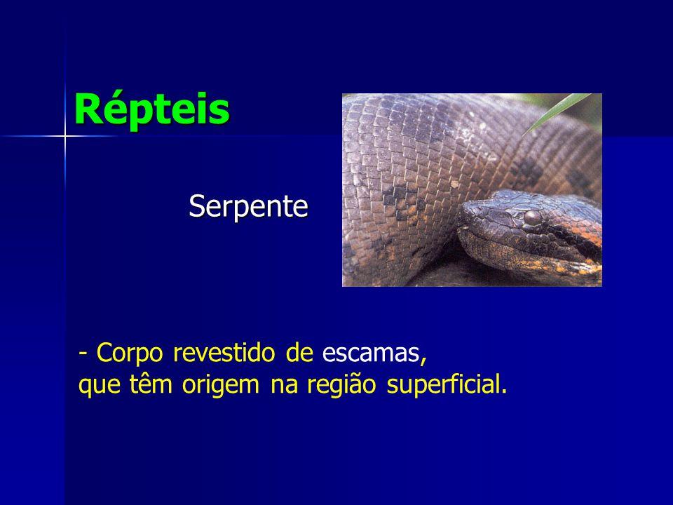 Répteis Serpente Corpo revestido de escamas,