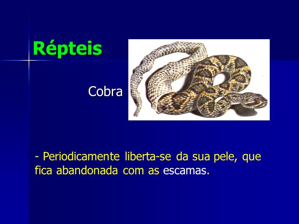 Répteis Cobra Periodicamente liberta-se da sua pele, que fica abandonada com as escamas.