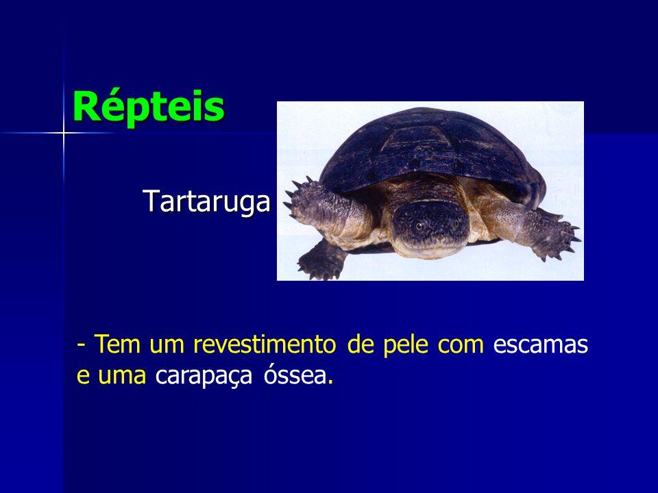 Répteis Tartaruga Tem um revestimento de pele com escamas e uma carapaça óssea.