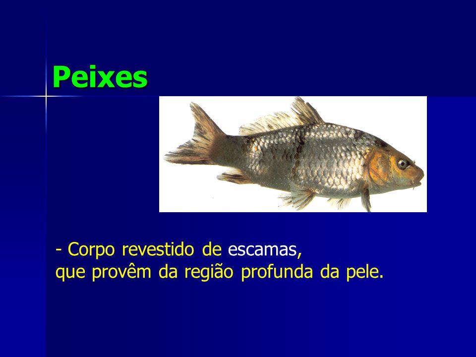 Peixes - Corpo revestido de escamas,