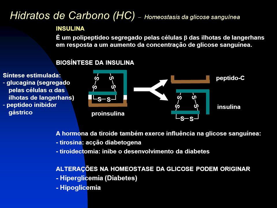 Hidratos de Carbono (HC) – Homeostasis da glicose sanguínea