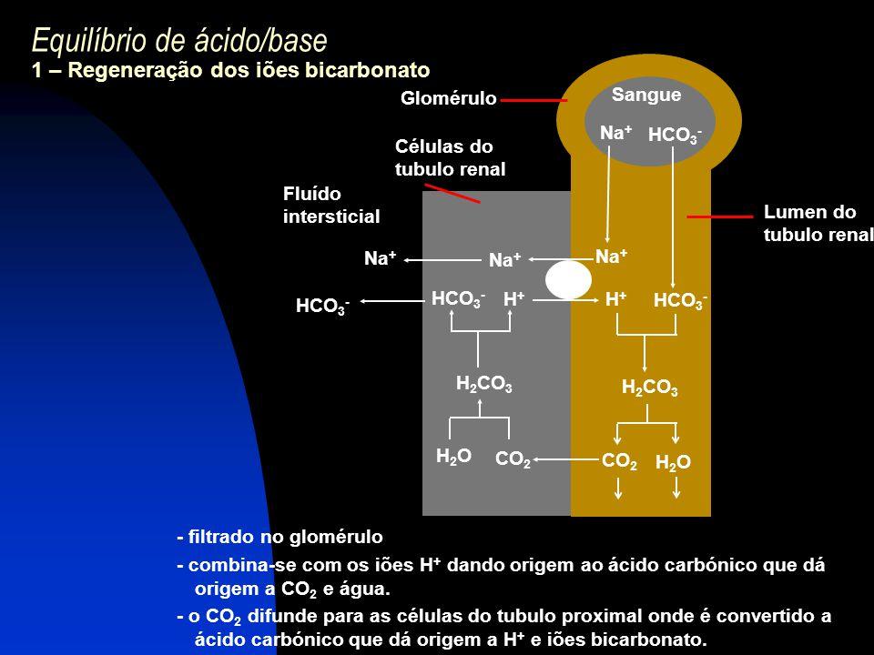 Equilíbrio de ácido/base 1 – Regeneração dos iões bicarbonato