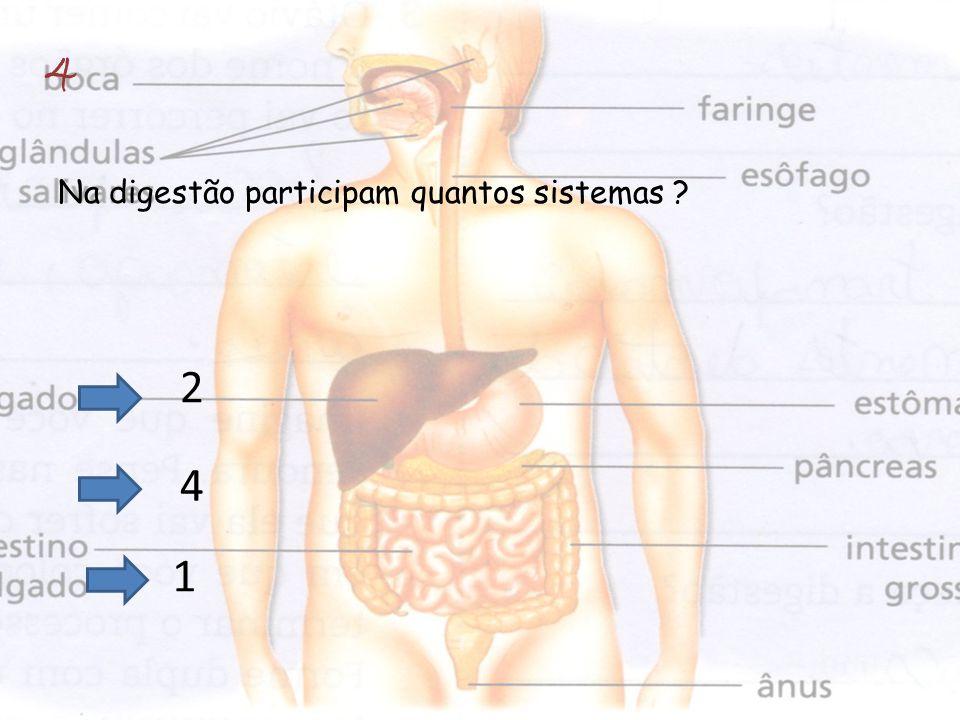 4 Na digestão participam quantos sistemas 2 4 1